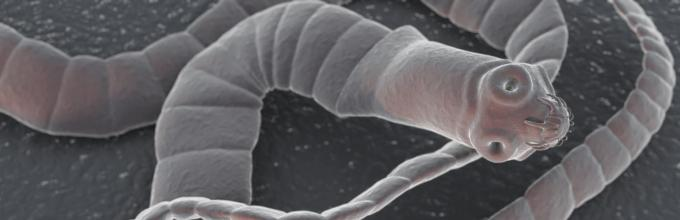 rossz lehelet a paraziták miatt